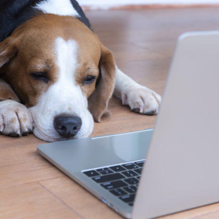 chien fatigué au travail